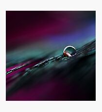 Rainbow Drop on Feather Photographic Print