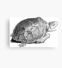 Drudge Reptile  Canvas Print