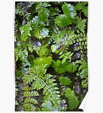 Where Ferns Grow Poster