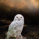 Snowy Owl by KathleenRinker