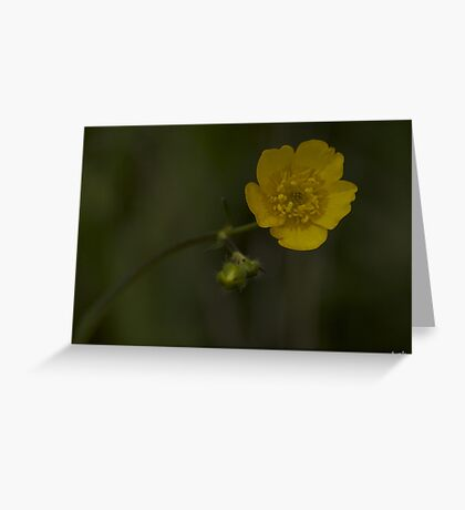 Meadow Buttercup - Burntollet Woods, County Derry Greeting Card