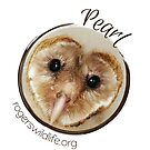 Pearl the Barn Owl by rogerswildlife