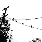 Crows on a wire by Douglas E.  Welch
