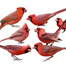 Seven Red Birds A Chirping by Bonnie T.  Barry