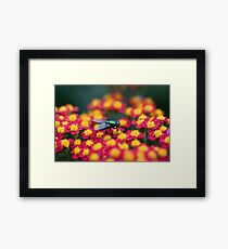 Red, Pink or Green? Framed Print