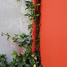 Brush Place Vine by geot