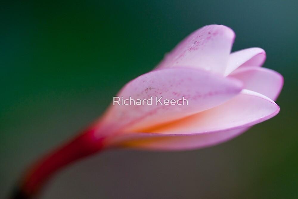 Pretty in pink by Richard Keech