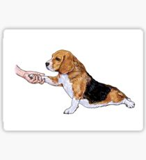 Human hand holding beagle's leg Sticker