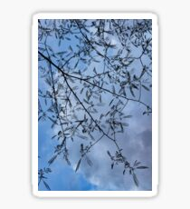 Graceful Lace in the Sky - Mimosa Leaves and Buds Against Dusk Clouds - Vertical View Downwards Left Sticker