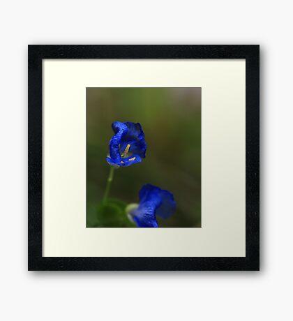 Blue Flowers Framed Print