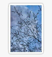 Graceful Lace in the Sky - Mimosa Leaves and Buds Against Dusk Clouds - Vertical View Upwards Right Sticker
