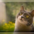 Oh Look © Vicki Ferrari Photography  by Vicki Ferrari