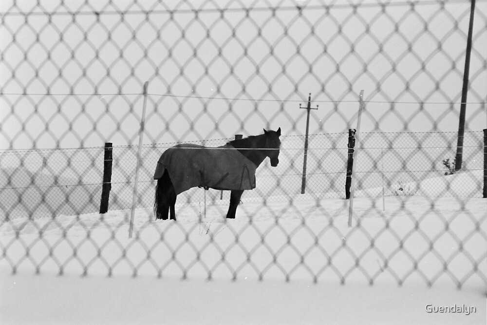 CHE COSA VUOI ? NON HAI MAI VISTO UN CAVAllO CON IL CAPPOTTO !  what wouldYOU LIKE? YOU'VE NEVER SEEN A  HORSE WITH THE COAT  ! VETRINa RB explore aprile 2013            ! by Guendalyn