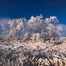 Frosty by IanMcGregor