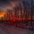 Sunrise Trees by IanMcGregor