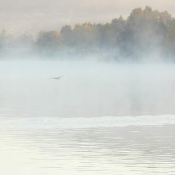 Bird in the Mist by Politas