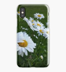white daisies iPhone Case/Skin