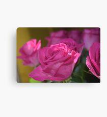 Beautiful Pink Roses Canvas Print