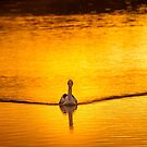 Golden Pelican by Dave  Hartley