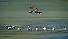 Flamingos in the backfield by Yukondick