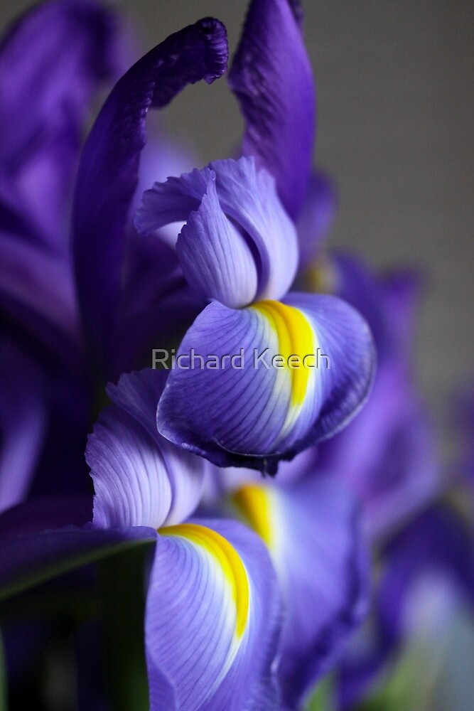 Iris II by Richard Keech