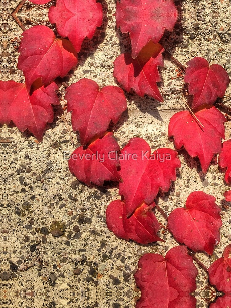 Cute Heart-Shaped Red Fall Vine Leaves by beverlyclaire