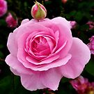 Lady Rose by Eugenio