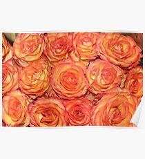 Orange Roses Poster