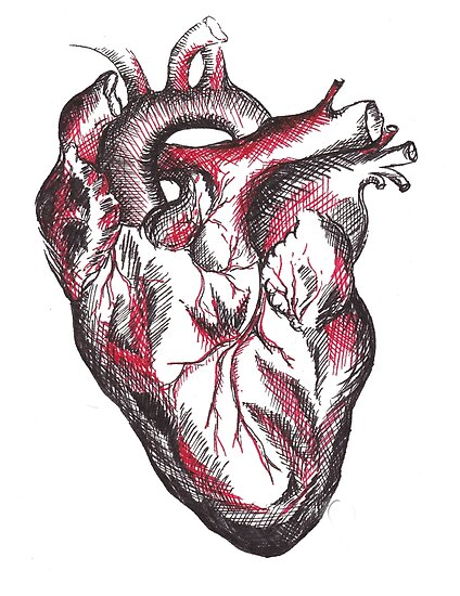 Pósters «Dibujo anatómico de un corazón humano» de mugs-munny ...