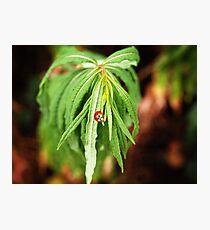The Lonely Ladybug Photographic Print