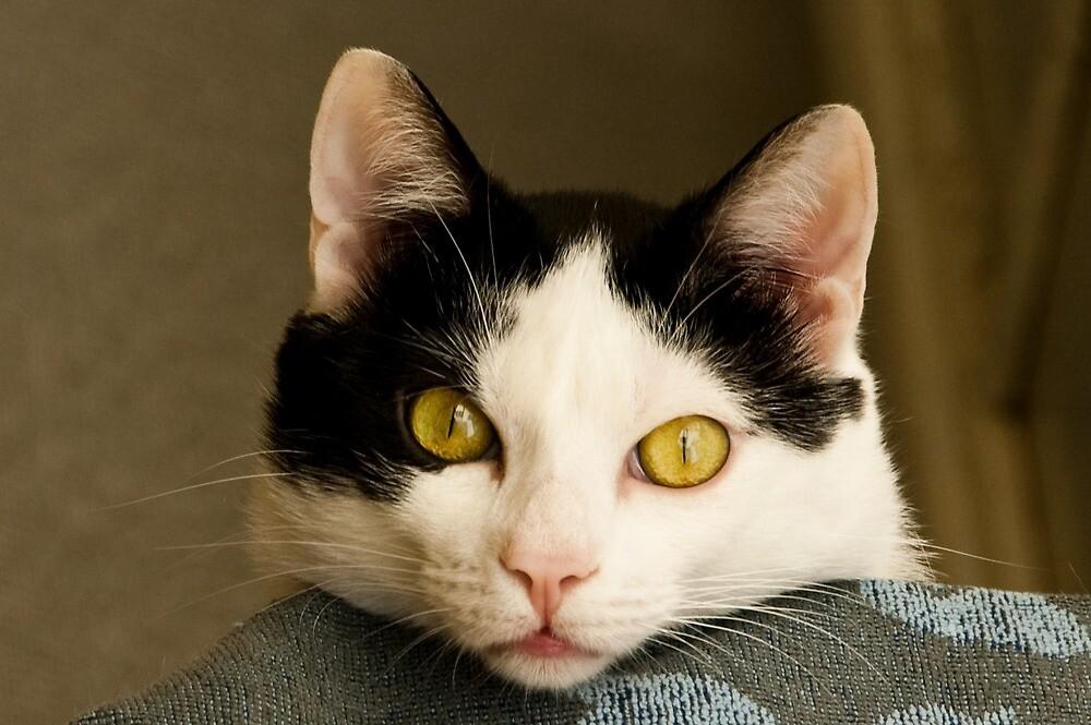 Cat eyes by L Lee McIntyre
