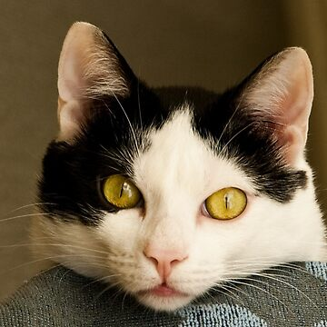 Cat eyes by leemcintyre