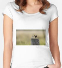 Red Backed Fairy Wren Women's Fitted Scoop T-Shirt
