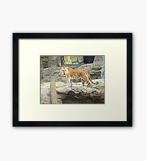 Looking Your Way Framed Print