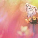 Colorful dream... by Bob Daalder