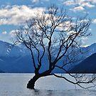 Tchaikovsky's Tree Lake  by Digby