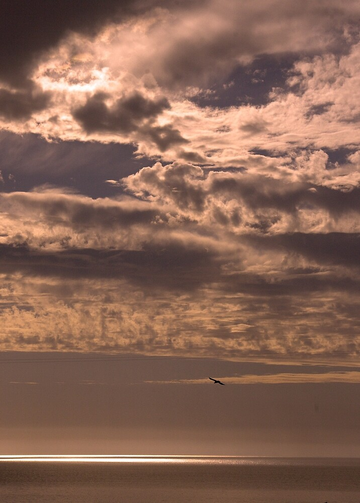 Seagull in the clouds at sunset by David Chesluk