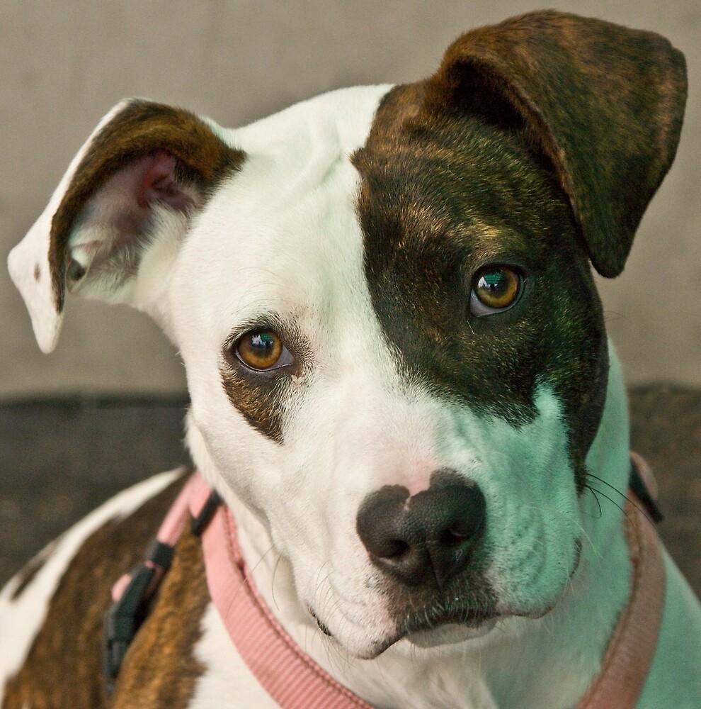 Daisy the shelter dog by David Chesluk