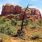 Sedona - Arizona by Alberto  DeJesus