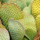 Be My Cactus Valentine by Alberto  DeJesus