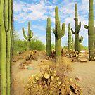 Cactus by Alberto  DeJesus