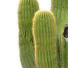 Cactus - Arizona by Alberto  DeJesus