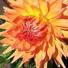 orange dahlia by geot