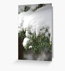 Snow-Flocked Pine Boughs Greeting Card
