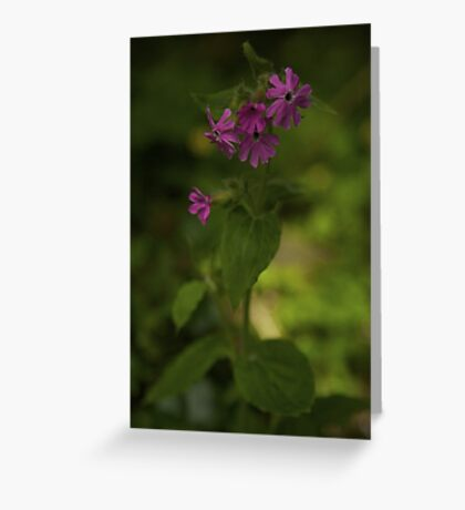 Pink Campion in Prehen Woods, Derry Greeting Card