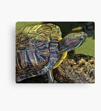slider turtle Canvas Print