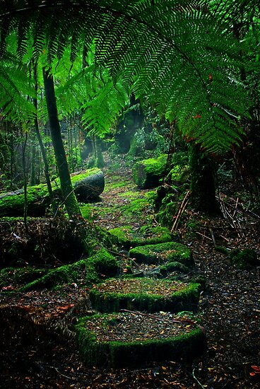 Mother Earth - Tarkine Rainforest by Rhana Griffin