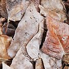 Decomposing Aspen Leaves by Jared Manninen