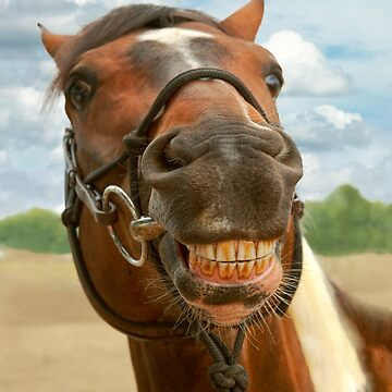 Animal - Horse - I finally got my braces off by mikesavad