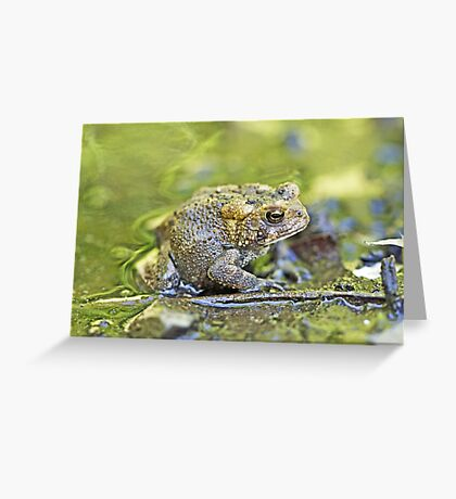 Eastern American toad - Anaxyrus americanus Greeting Card